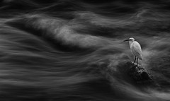 Stillness. (MarcoSartoriPhoto) Tags: blackandwhite fineart heron longexposure nature mzuiko75mmf18 em1 olympus marcosartoriphoto