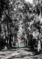 les de Lerins Cannes (paolini) Tags: forest landscape trail child girl beautiful bw love photooftheday summer lgg4 naturelovers nature trees picoftheday noiretblanc