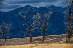 tetons_2016_15web (Jessica Haydahl Photography) Tags: grand teton national park wyoming tetons mormon row john molton barn apsens fall colors infrared photography nikon d810 d7000 pentax 645z medium formate landscape ansel adams