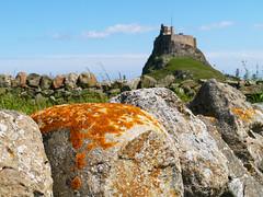Lindisfarne Castle (Niall Corbet) Tags: england northumberland lindisfarne holyisland nationaltrust castle stone wall lichen orange