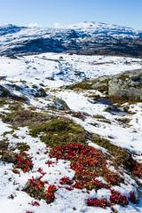 IMG_2375 Vinteren nrmer seg. (JarleB) Tags: winter autumn vinter hst mountain fjell rldal haukelifjell hordaland haukeli blbergdalen austmannatjrn
