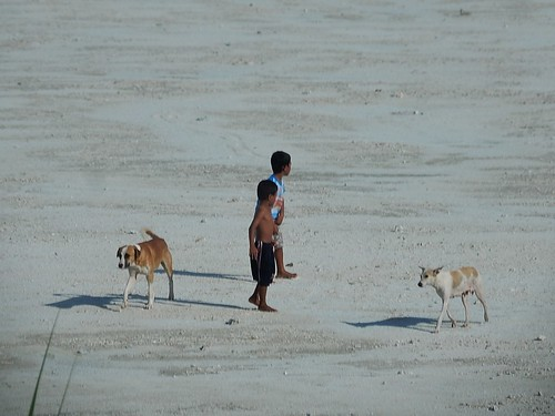 Boys and Dogs on Coral Beach