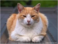 Un chat sur le toit