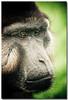 So close to us... (sergio.pereira.gonzalez) Tags: portrait monkey mono retrato singe babouin canon400d sergiopereiragonzalez httpfocale3fr