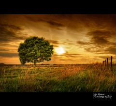 The tree of my destiny (Ivn Maigua) Tags: sunset holland tree landscape golden nikon thenetherlands sigma ivn hdr limburg nikond200 artistictouch ivnmaigua photoshopcs5 thetreeofmydestiny