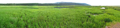 Potter Marsh Panorama (zxgirl) Tags: panorama alaska landscape ak scene anchorage wetlands marsh 2012 pottermarsh img1645 img1648 img1646 img1644 img1647 sx30 alaska2012