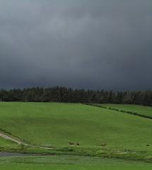 I Think It's Dark And It Looks Like Rain, You Said (Bricheno) Tags: horses field island scotland escocia loch szkocja schottland bute rothesay scozia écosse isleofbute 蘇格蘭 escòcia σκωτία स्कॉटलैंड lochgreenan bricheno greenanloch scoția