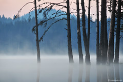 Another morning at Beglika (.:: Maya ::.) Tags: morning mist lake nature woods bulgaria  rodopi   rhodope   beglika    mayaeye mayakarkalicheva