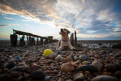 the gate keeper to the sea of souls (stocks photography.) Tags: seaside stocks whitstable herbaceousborder downonthebeach stocksofwhitstable stocksphotography michaelmarsh theseaofsouls stocksonflickr