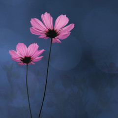 Cosmos Flowers (TouTouke) Tags: morning pink blue autumn wild sky plant flower macro green nature beautiful up closeup yard garden season landscape spring nice colorful pretty close natural bright blossom gardening outdoor vivid peaceful calm fresh petal beam serenity environment serene bud asteraceae cosmos calmness blooming fertile asterales asteroideae colorphotoaward coreopsideae