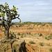 Desierto de la Tatacoa (3)