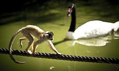 Lagos Zoo 7 (Chris Ulliott) Tags: portugal algarve lagoszoo