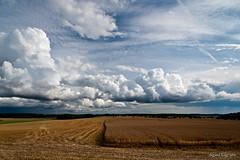 Follo Harvest Landscape