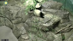 2016_07-20c (gkoo19681) Tags: nationalzoo sohappy stealing meixiang beibei unfortunateevents sharingiscaring yummyapple ccncby