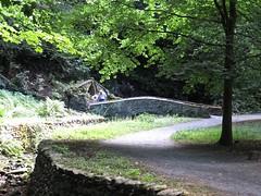 3233 A bridge in Plas Newydd garden, Llangollen (Andy panomaniacanonymous) Tags: 20160806 bbb bridge cymru garden ggg llangollen plasnewydd trees ttt wales