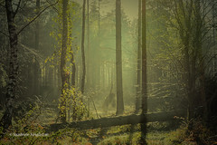 Deep (Suzanne Singleton) Tags: newforest spring mystical ethereal peaceful sunrise nature forest trees sunlight silhouettes green shadows