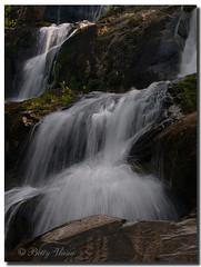 Shenandoah National Park (Betty Vlasiu) Tags: shenandoah national park virginia wildlife nature