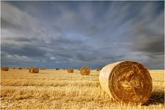 El final del verano (Ana_Lobo) Tags: alpacas pacas campo cereal castillaylen zamora nd hoya casasecadelaschanas