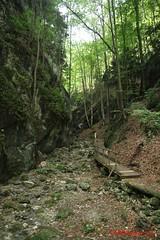 IMG_8918 (Pfluegl) Tags: niedersterreich sterreich austria lower wandern hikking hiking wanderlust natur nature autumn summer rock steine geology geologie steinwandklamm klamm gorge canyon