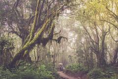 Through The Jungle (Ali Sabbagh) Tags: travel world forest jungle canon eos7d nature journey adventure tanzania rainforest moshi