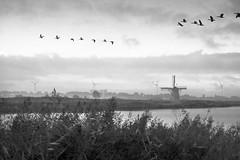 160917_SAM_8718 (Jan Jacob Trip) Tags: windmill water black white bw sky cloud bird geese goose netherlands munnikenpolder leiderdorp molen landscape