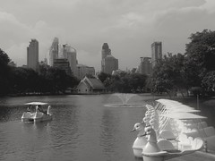 Cygnes Swans (alainpere407) Tags: alainpere streetofbangkok bangkok pedalos