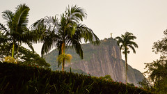 DSC_5428 (sergeysemendyaev) Tags: 2016 rio riodejaneiro brazil jardimbotanico botanicgarden     outdoor nature plants    green  beauty
