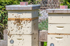 Kept Bees (K.G.Hawes) Tags: olbrich botanical gardens garden madison wisconsin bee bees insect insects bug bugs hive hives beekeeping beekeeper swarm