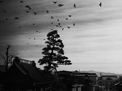 The birds (c_c_clason) Tags: street leica blackandwhite japan temple digilux2 schwarzweiss nagano zenkoji digilux