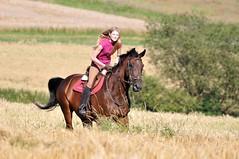 Reitershooting (Dorothee Rie) Tags: horse brown girl feld blond reiter pferd mdchen reiten horseriding brauner galopp reiterin galoppieren warmblter