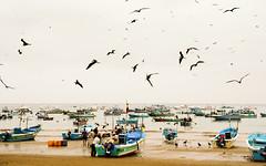 Puerto Lopez (Alex Schwab) Tags: blue fish beach pelicans birds boats ecuador fishing fisherman sand market harbour equator angling isladelaplata puertolopez workup