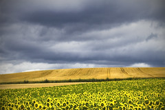 On the road (inmacor) Tags: road storm france clouds landscape viajando explore sunflowers nubes verano tormenta campo fields traveling francia girasoles enruta ltytr1 inmacor