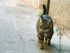 Schleckermaul (bonck2011) Tags: tongue cat lick katze nametag nase zunge vegetarier namensschild schlecken weltkatzentag borisnowack bonckdeblog