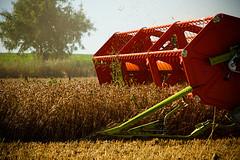 harvesting, the bigger one (Stefan Lorse) Tags: summer sun field germany deutschland corn sommer saxony feld sachsen sonne korn harvester harvesting getreide mähdrescher ernten canoneos50d canonef70200mmlf14usm