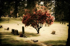 resting in peace (Steven Schnoor) Tags: usa color tree art cemetery grass canon outdoors washington colorful shadows lawn headstones peaceful graves aberdeen 5d canon5d shrub markers fernhill schnoor saturationadjustment simplelogic okayyeah
