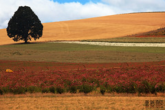 Layers (Ian Sane) Tags: blue sky tree grass oregon landscape ian photography loop echinacea silverton d farm hill images ne system valley fields layers crops agriculture irrigation sane evens hwe