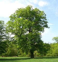 Parc de Schoppenwihr (04/2012) (satanas68) Tags: trees france tree lumix panasonic arbres alsace arbre baum fz50 hautrhin bame schoppenwihr parcdeschoppenwihr