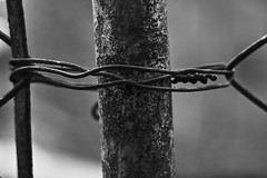 Bound to you (Franca Alejandra) Tags: blackandwhite bw blancoynegro nature photography mood top details bn rainy f survival biancoenero touching noireetblanc francafranchi