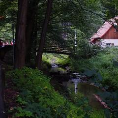 (To Bert) Tags: wood green art nature forest rathen