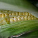 More Corn - August 22nd 2012