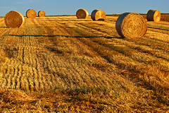 Shades of August (RainerSchuetz) Tags: harvest stubblefield baleofstraw