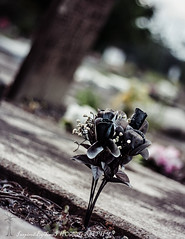 (inspiredbytimephotography) Tags: flowers flower grave graveyard canon alabama creepy disturbing emotional emotions thoughtprovoking flickraward canoneosrebelxsi450d inspiredbytimephotography