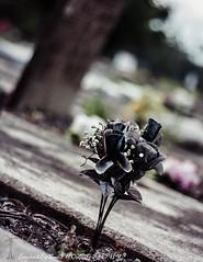 (inspiredbytimephotography) Tags: flowers flower grave graveyard canon alabama creepy disturbing emotional emotions thoughtprovoking flickraward canoneosrebelxsi450d inspiredbytimephotography