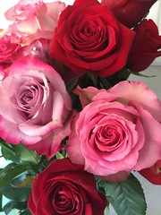 Flowers to Brighten Your Day (Vegan Feast Catering) Tags: red rose delight smell