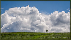 The Last One - Week 42 - Minimalist (Maclobster) Tags: chesaw road isolated tree clouds lonely horizon grass sky