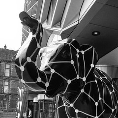 Photo of Lizzietron 2.2 Herd of Sheffield 37/58 #diamondlizzie #herdofsheffield #sheffield #yorkshire #universityofsheffield #nikbax