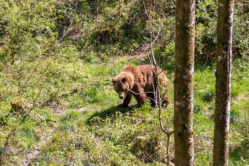 Parc des ours de Bad Rippoldsau