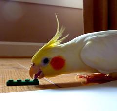 P1090801 (fee-ach) Tags: lego bird avian legobricks toy toys buildingblocks