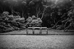 Here they talked of revolution (Howard Sandford) Tags: outside lonliness emptiness trees seat emptychairs