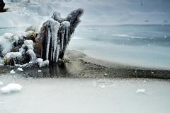 Congelados - Puyehue (Norpatagonia - Chile) (Noelegroj (More than 6 Million views.Thank you all) Tags: chile norpatagonia puyehue nationalpark parquenacional winter invierno frozen congelado snow nieve landscape paisaje pond laguna